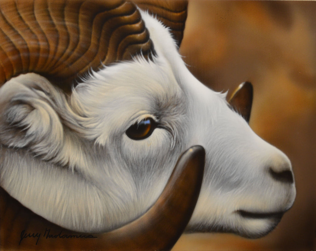 Big Horn Sheep Original by Jerry Gadamus