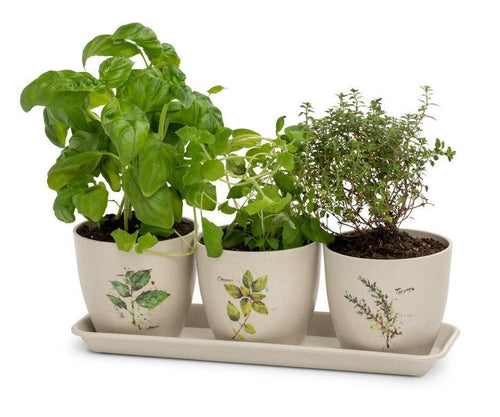 DC Herb Planter Set