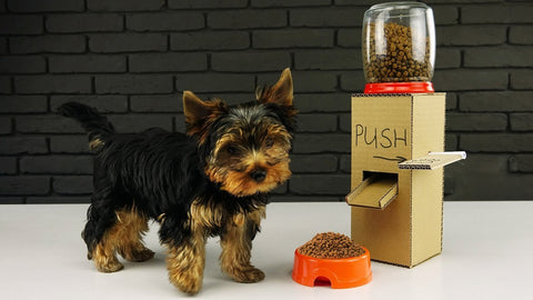 dog_food_dispenser