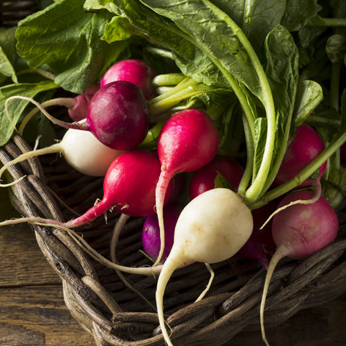 Colorful Easter Egg Radishes - Hardie's Direct, Dallas TX