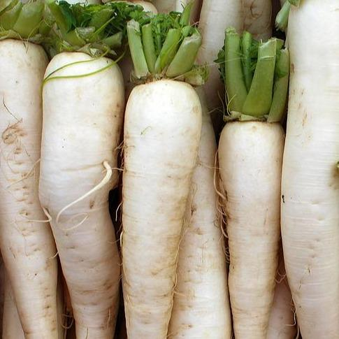 Locally Grown Daikon Root - Hardie's Direct, Dallas TX