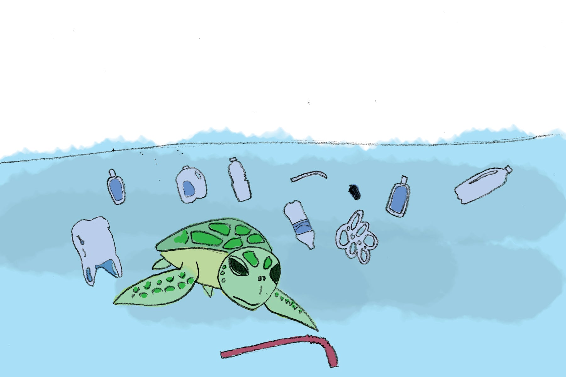 Myrtle the Turtle children's book