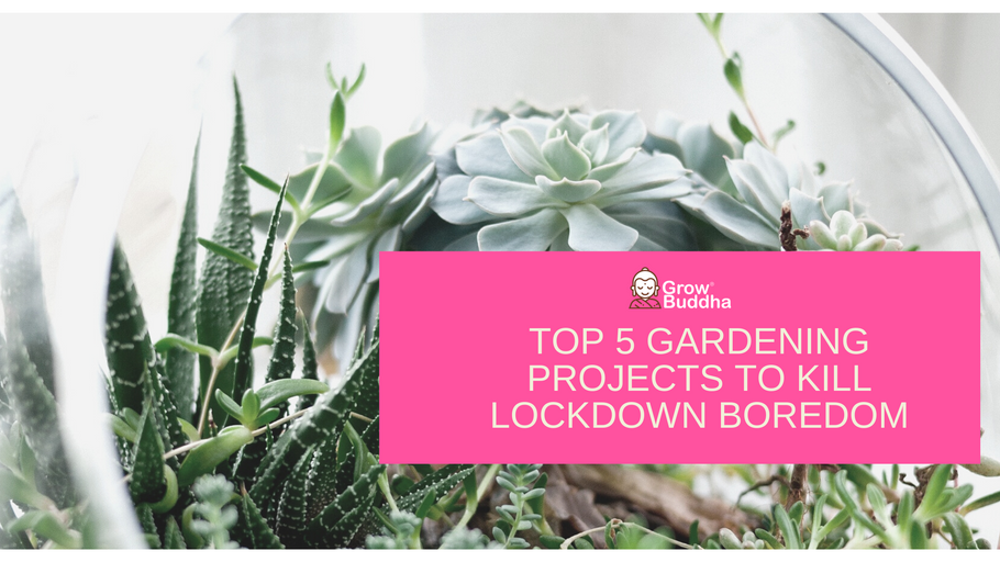 Top 5 Gardening Projects to do during Lockdown to Kill Boredom