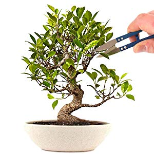 grow your own bonsai tree from seeds