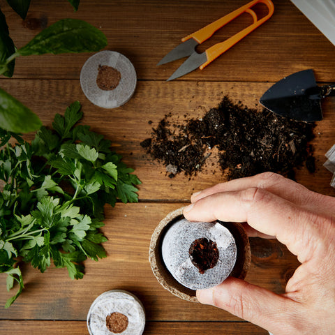 grow your own herbs from seeds