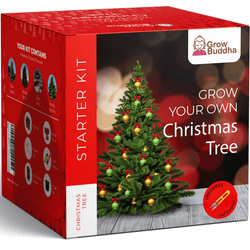 Grow Your Own Christmas Tree Starter Kit
