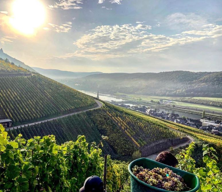 Old Word Wines: Visiting Germany-Austria Part 4/4