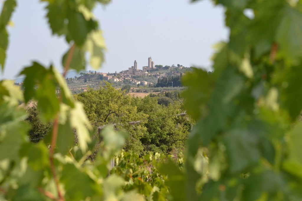 Old World Wines: Visiting Italy Part 2/4