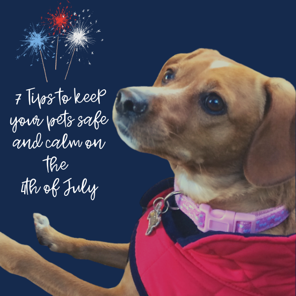 Keeping Pets Safe & Calm this 4th of July