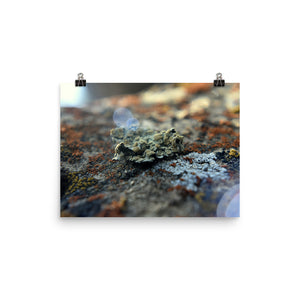 Lichen Poster - Aly Pictured It