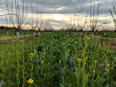Cover Crop - Sustainable Farming