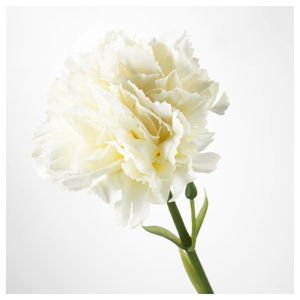 SMYCKA Artificial flower, carnation, white, 30 cm