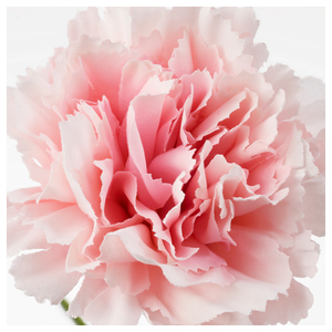 SMYCKA Artificial flower, carnation, pink, 30 cm