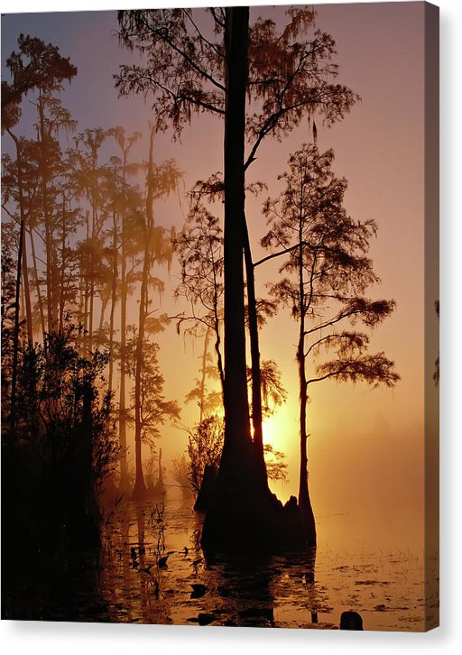 Foggy Backlit Trees In Okefenokee Swamp - Canvas Print from Wallasso - The Wall Art Superstore