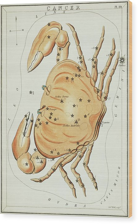 Vintage Astronomy Chart of Cancer Constellation - Wood Print from Wallasso - The Wall Art Superstore
