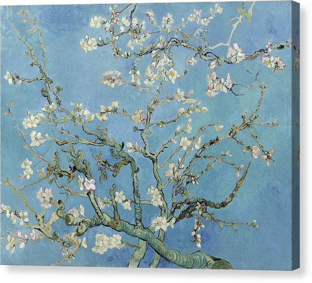 Almond Blossom by Vincent van Gogh, 1890 - Canvas Print from Wallasso - The Wall Art Superstore