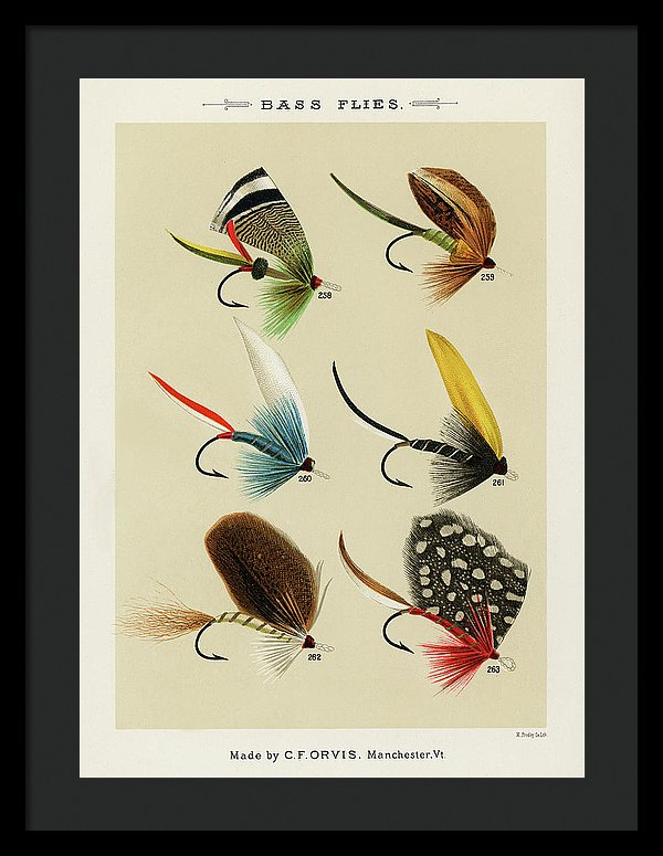 Antique Bass Flies Fishing Lure Illustration, 1892 - Framed Print from Wallasso - The Wall Art Superstore