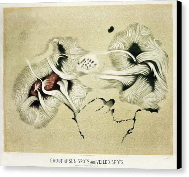 Antique Illustration of Sun Spots, 1881 - Canvas Print from Wallasso - The Wall Art Superstore