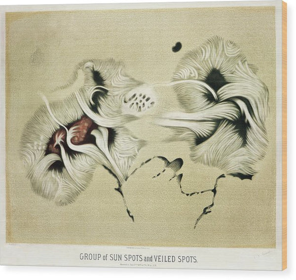 Antique Illustration of Sun Spots, 1881 - Wood Print from Wallasso - The Wall Art Superstore