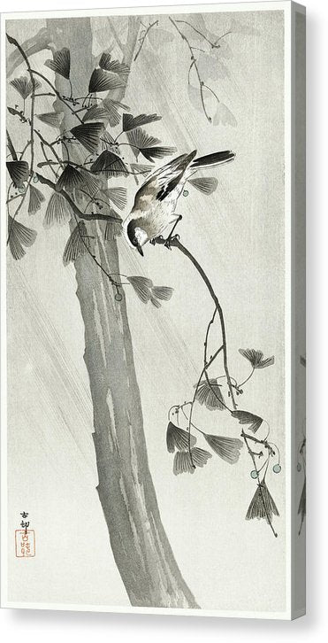 Antique Japanese Bird In Tree Branch, 1900 - Canvas Print from Wallasso - The Wall Art Superstore