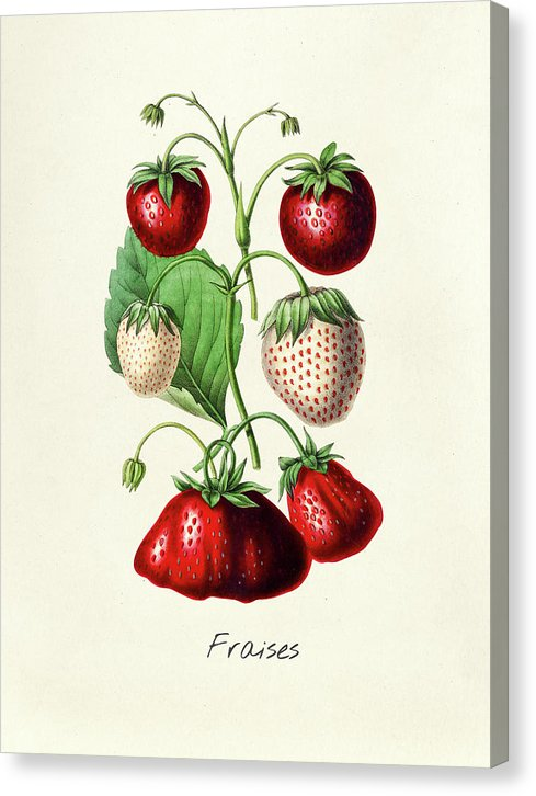 Antique Strawberry Illustration - Canvas Print from Wallasso - The Wall Art Superstore