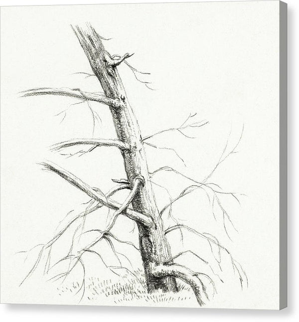 Antique Study of A Tree, 1816 - Canvas Print from Wallasso - The Wall Art Superstore