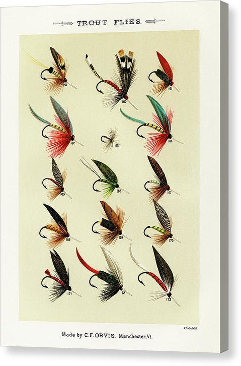 Antique Trout Flies Fishing Lure Illustration, 1892 - Canvas Print from Wallasso - The Wall Art Superstore
