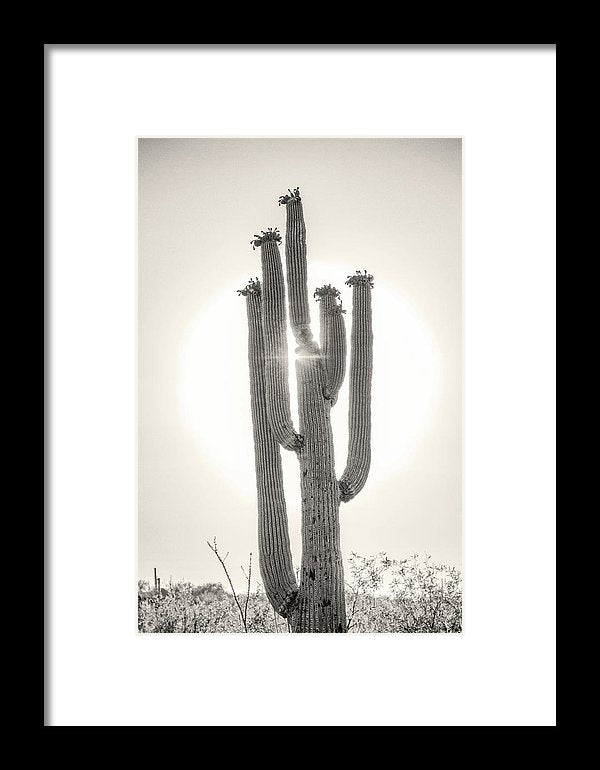 Backlit Saguaro Cactus, Sepia - Framed Print from Wallasso - The Wall Art Superstore