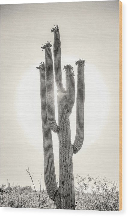 Backlit Saguaro Cactus, Sepia - Wood Print from Wallasso - The Wall Art Superstore
