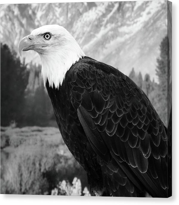 Bald Eagle - Canvas Print from Wallasso - The Wall Art Superstore