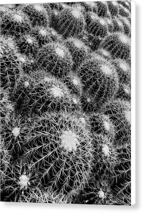 Beehive Cactus Texture - Canvas Print from Wallasso - The Wall Art Superstore