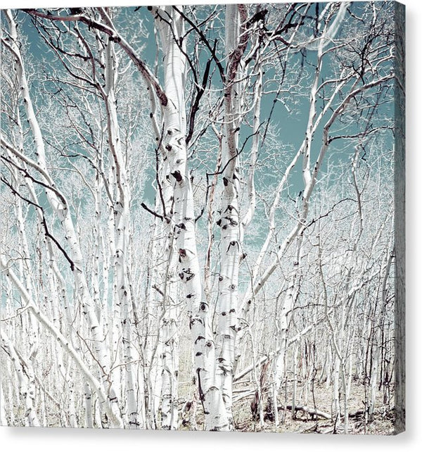 Birch Trees In Utah High Country - Canvas Print from Wallasso - The Wall Art Superstore