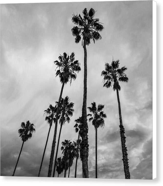 Black and White Palm Trees In Silhouette - Canvas Print from Wallasso - The Wall Art Superstore