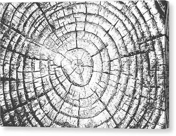 Black and White Tree Rings - Canvas Print from Wallasso - The Wall Art Superstore