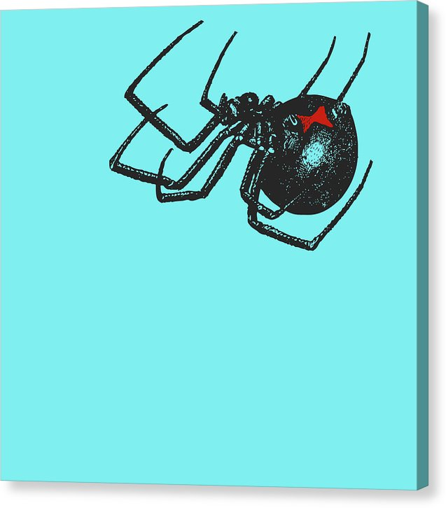 Black Widow Spider On Blue Background Illustration - Canvas Print from Wallasso - The Wall Art Superstore