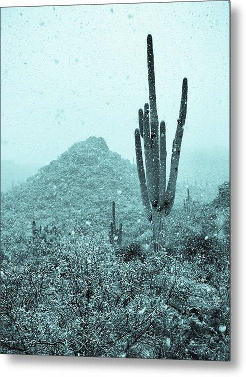 Blue Tone Saguaro Cactus and Mountain In Snow - Metal Print from Wallasso - The Wall Art Superstore