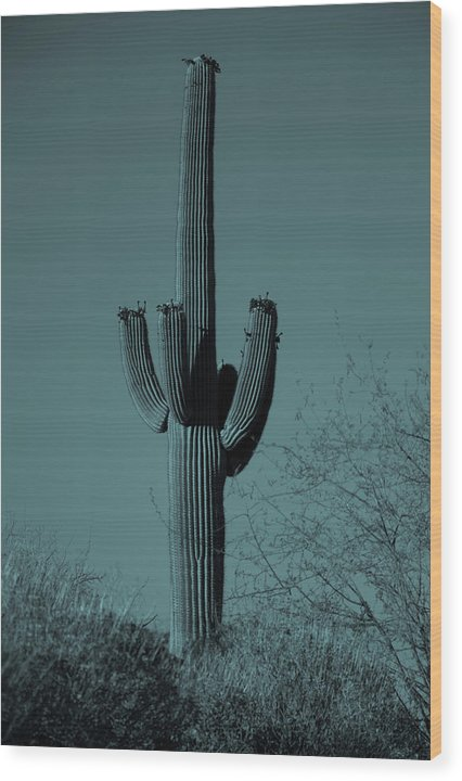 Blue Tone Saguaro Cactus - Wood Print from Wallasso - The Wall Art Superstore