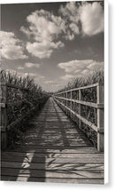 Boardwalk Leading Through Plants - Canvas Print from Wallasso - The Wall Art Superstore