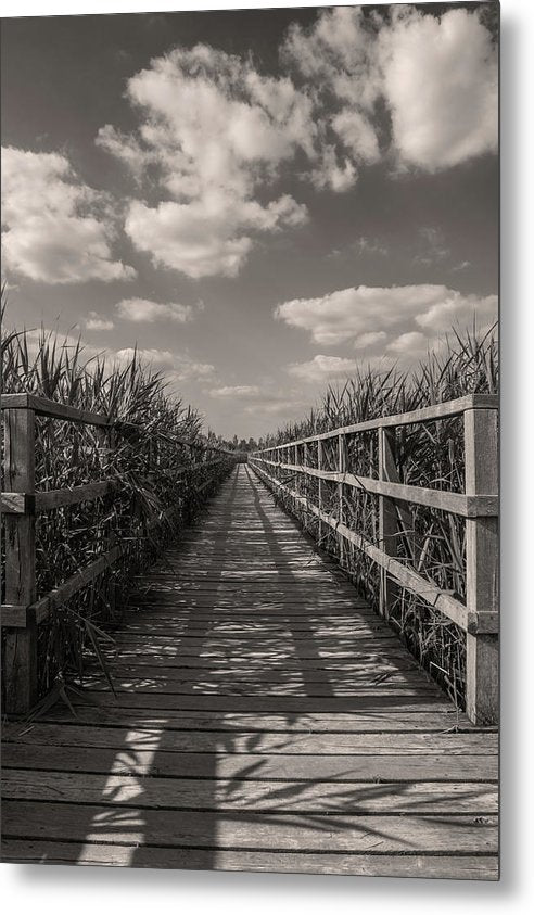 Boardwalk Leading Through Plants - Metal Print from Wallasso - The Wall Art Superstore