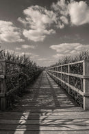 Boardwalk Leading Through Plants - Art Print from Wallasso - The Wall Art Superstore