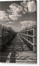Boardwalk Leading Through Plants - Acrylic Print from Wallasso - The Wall Art Superstore