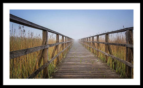 Boardwalk Leading Through Tall Grass - Framed Print from Wallasso - The Wall Art Superstore