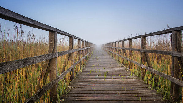 Boardwalk Leading Through Tall Grass - Art Print from Wallasso - The Wall Art Superstore