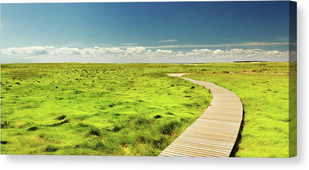 Boardwalk Through Vibrant Green Grass Pasture - Canvas Print from Wallasso - The Wall Art Superstore