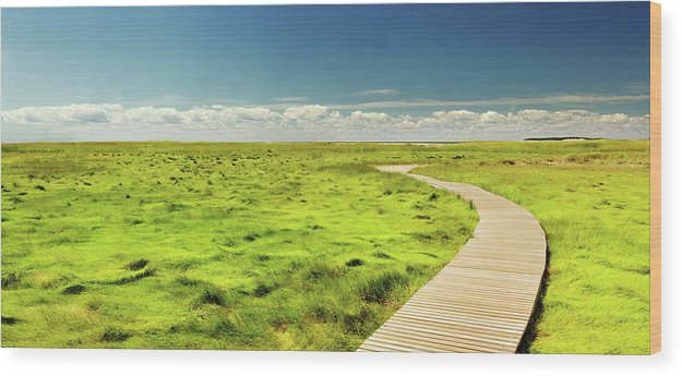 Boardwalk Through Vibrant Green Grass Pasture - Wood Print from Wallasso - The Wall Art Superstore
