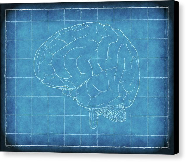 Brain Blueprint - Canvas Print from Wallasso - The Wall Art Superstore