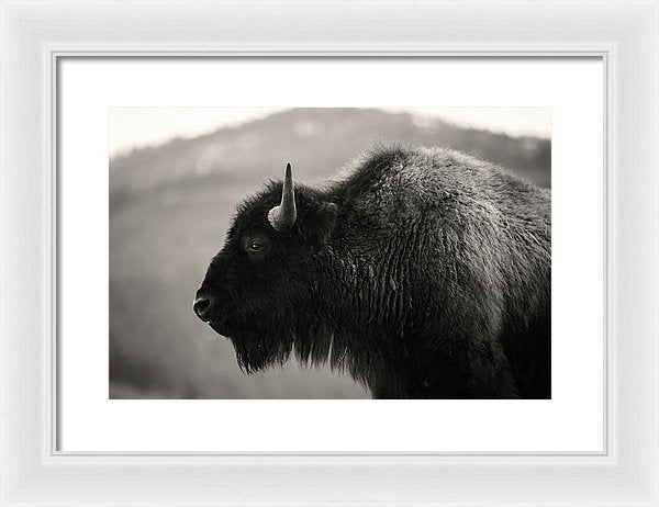 Buffalo Profile - Framed Print from Wallasso - The Wall Art Superstore