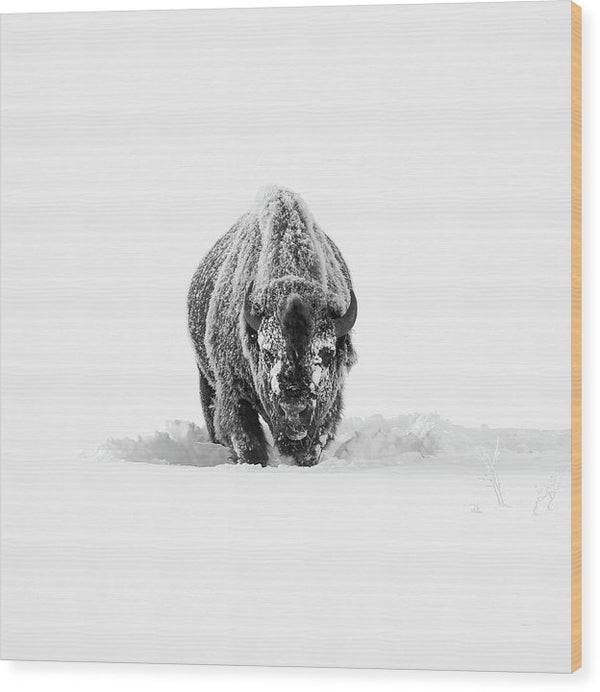Buffalo Standing In Deep Snow - Wood Print from Wallasso - The Wall Art Superstore