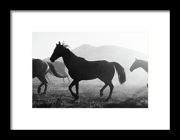 Horse Silhouette, Black And White - Framed Print from Wallasso - The Wall Art Superstore