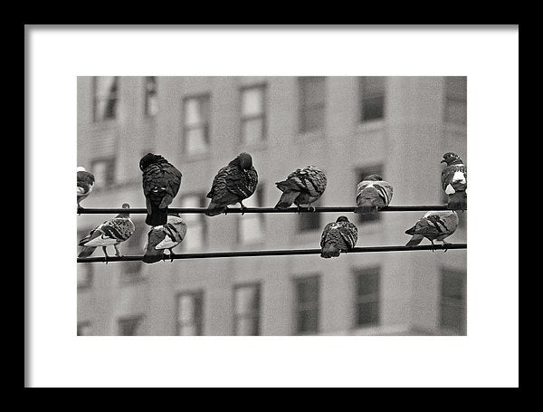 City Birds On Power Line - Framed Print from Wallasso - The Wall Art Superstore